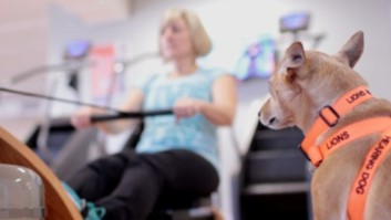 Hearing dog watching lady exercising on an indoor rower